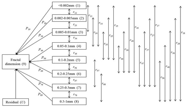 Path analysis diagram for the relationships between fractal dimension and micro-aggregate fractions.