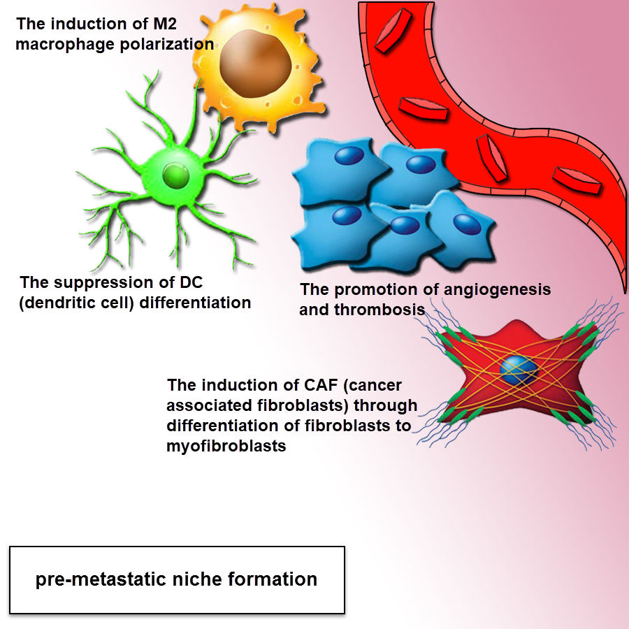 Exosomes in cancer: small vesicular transporters for cancer