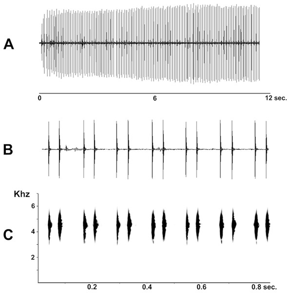Advertisement call of Pseudopaludicola restinga sp. nov. (LGE 20329), oscilogram of a sequence of advertisement calls (A); sonogram detailing seven calls (B); audio spectrogram (C).