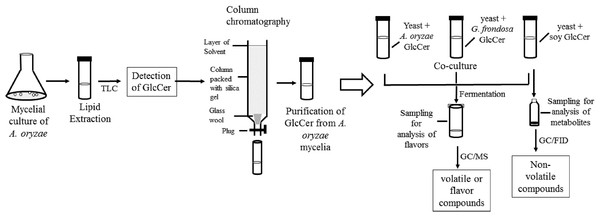 Flow chart of the experimental procedure.