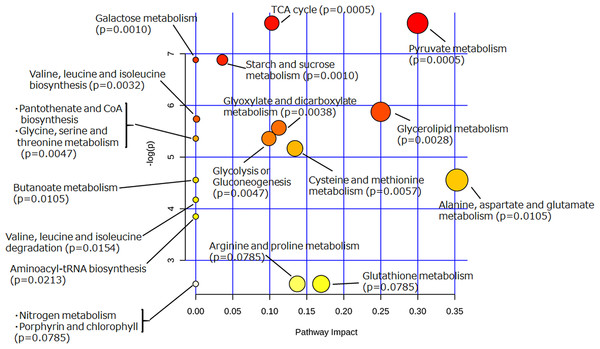Pathway analysis of extracellular metabolites of sake yeast incubated with or without soy glycosylceramide.
