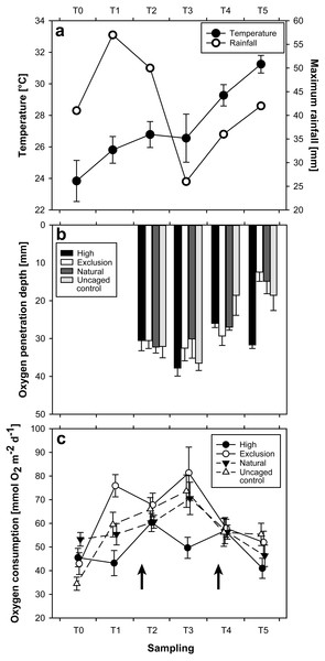 Plots of results for temperature and rainfall (A), oxygen penetration depth (B), and sediment oxygen consumption (C), at each sampling time.
