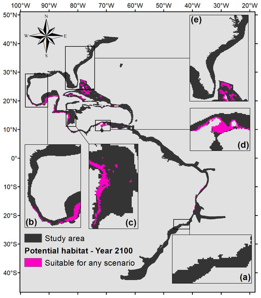 Map of potential habitat for P. caribaeorum in the year 2100 under any climate scenario (pink).