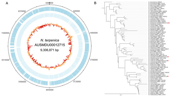 Genome and phylogenetic position of Nocardia terpenica AUSMD00012715.