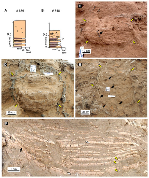 Features of fossil burrow fills.