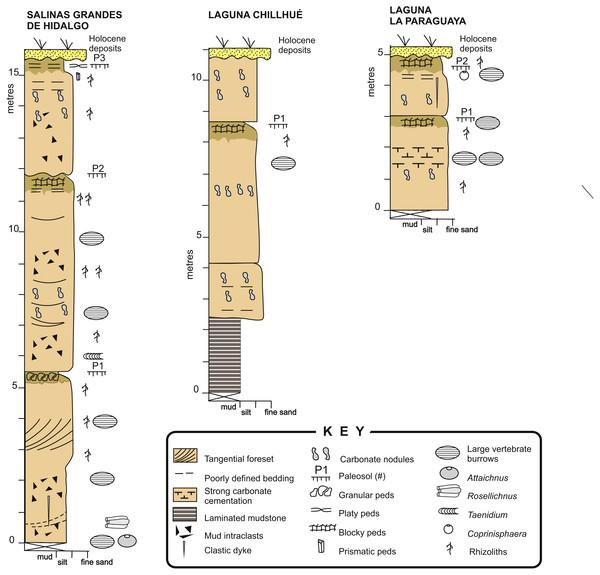 Sedimentary logs.
