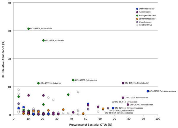 Prevalence versus relative abundance of bacterial OTUs.