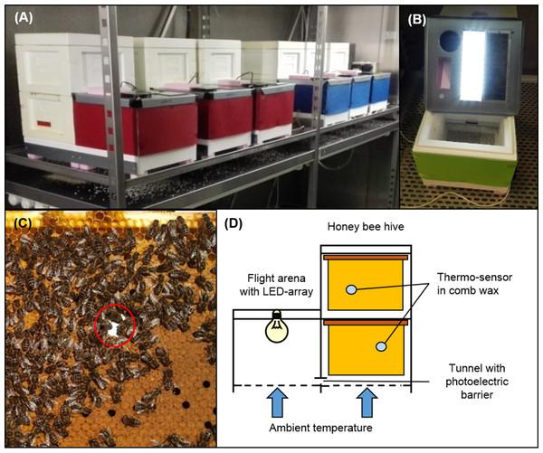 Experimental hive setup.