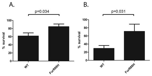 FurR88H confers a survival advantage to H. pylori when co-cultured with neutrophils.