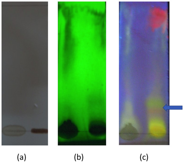 Thin layer chromatography of aqueous leaf extract of Passiflora suberosa.