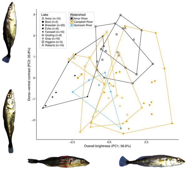 Variation in female colour among nine lake populations from Vancouver Island, British Columbia.