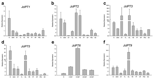 Expression of JcIPTs in various Jatropha tissues.