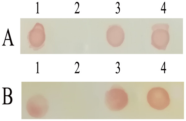 Immune-activity analysis of recombinant proteins.