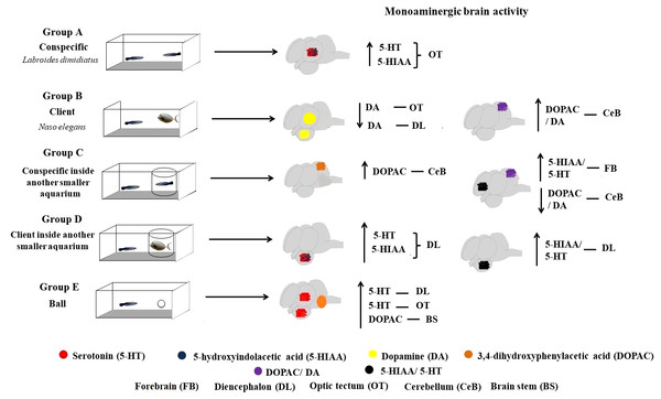 Monoaminergic brain activity in different social contexts.