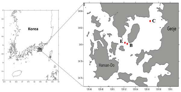 Sampling sites (C: Control site, E: Edge site, B: Bloom site).