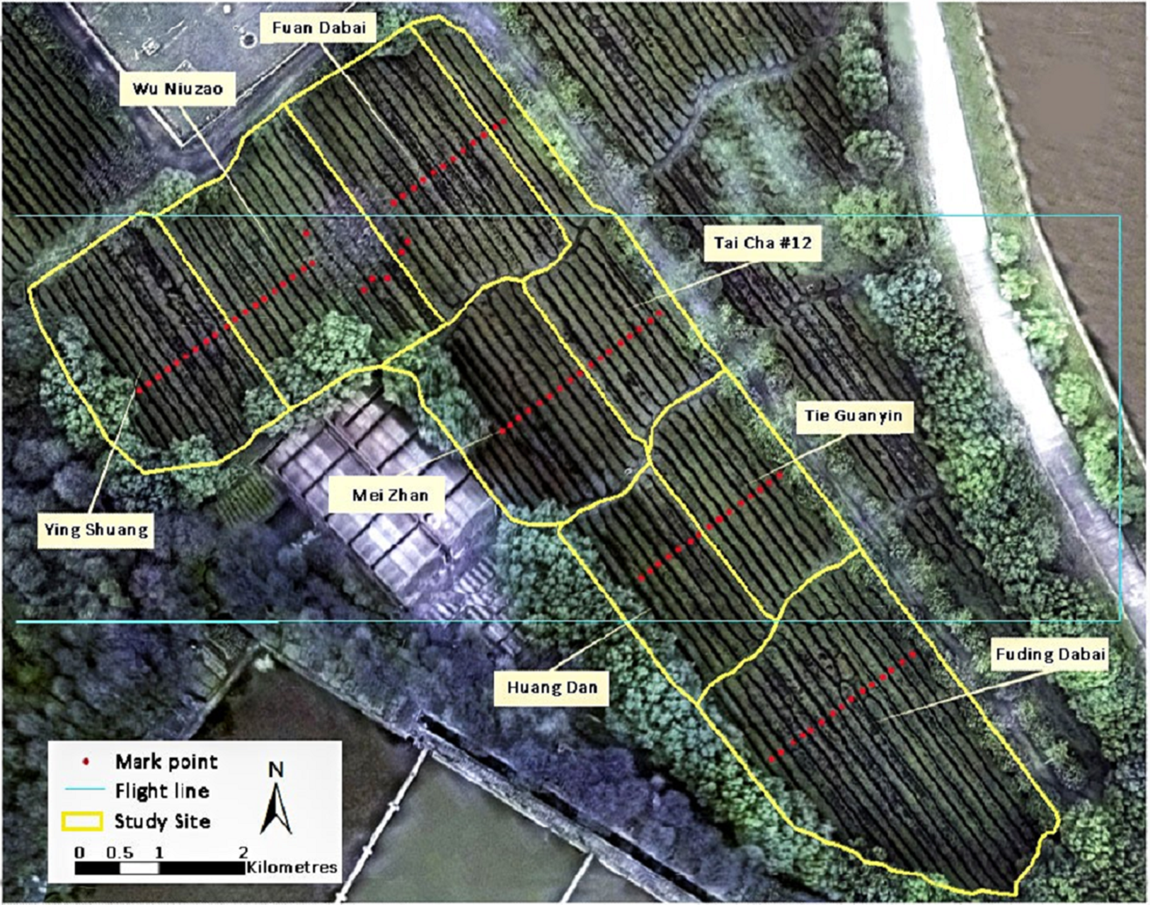 Tea Cultivar Classification And Biochemical Parameter Estimation Niu Huang Wan Download Full Size Image