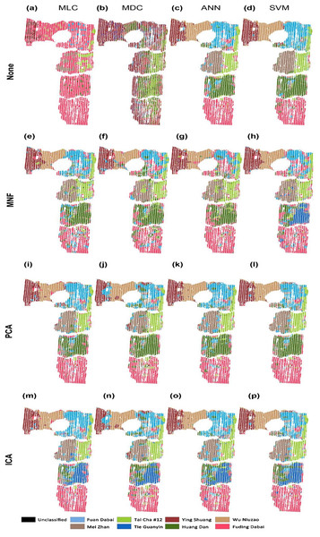 Classification of tea cultivars in the study region, with image pre-processing and classification method combinations of: (A) None+MLC (B) None+MDC (C) None+ANN (D) None+SVM (E) MNF+MLC (F) MNF+MDC (G) MNF+ANN (H) MNF+SVM (I) PCA+MLC (J) PCA+MDC (K) PCA+ANN (L) PCA+SVM (M) ICA+MLC (N) ICA+MDC  (O) ICA+ANN (P) ICA+SVM.