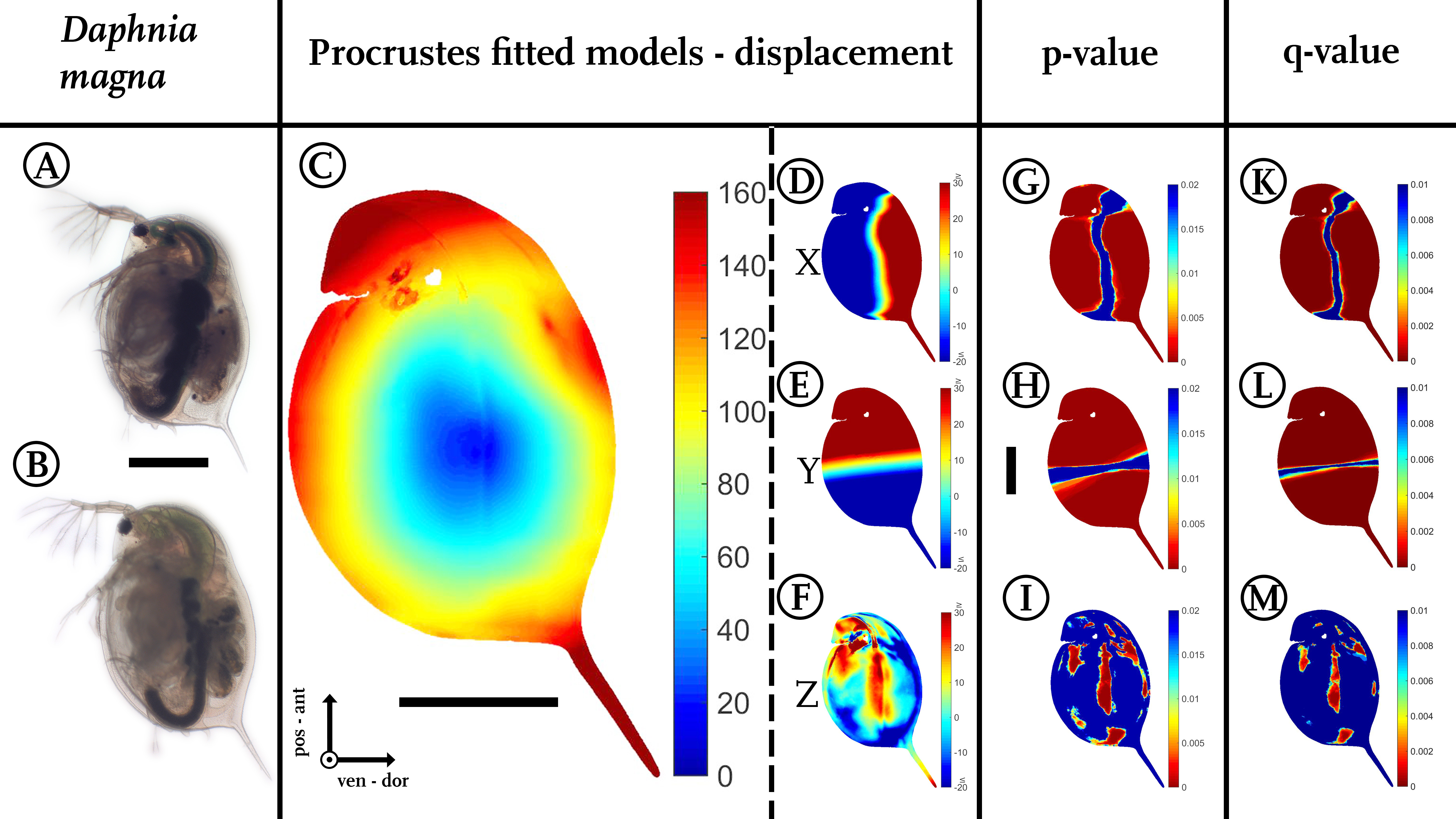 Scan, extract, wrap, compute—a 3D method to analyse morphological