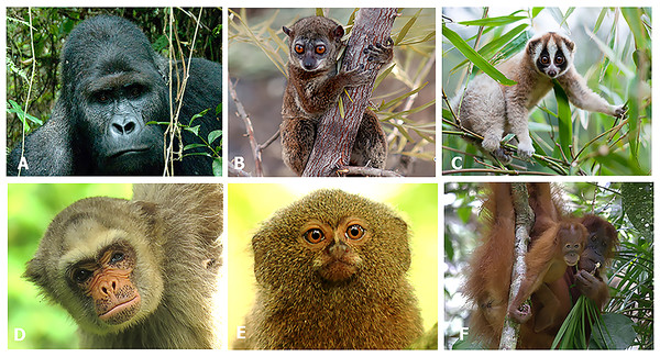 Photos of selected primates from each country.