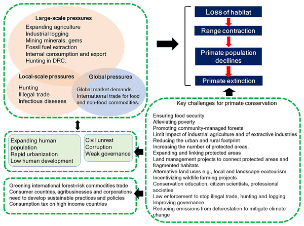 Diagram summarizing key environmental challenges common to Brazil, DRC, Madagascar, and Indonesia that affect conservation of their primate fauna.