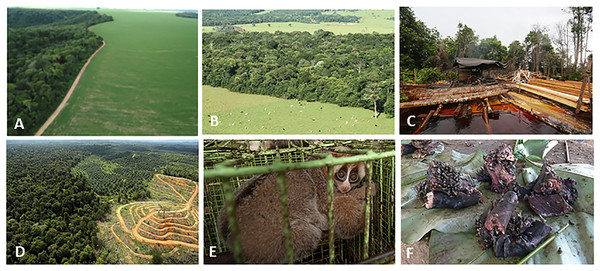 Photos of selected land cover changes in primate range countries, illegal primate trade, and the primate bushmeat trade.