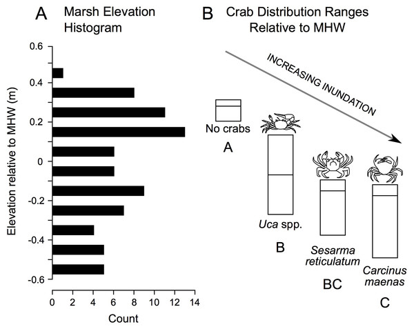 Distribution of study plot elevations relative to mean high water (A), and elevation distributions (inter-quartile ranges) of crab species caught in pitfall traps (B).
