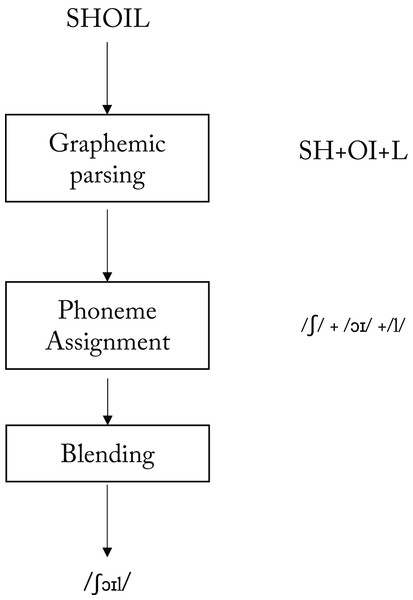 A model of a grapheme-to-phoneme conversion system for reading aloud (adapted from Coltheart, 1987, Figure 1.3, p. 16).