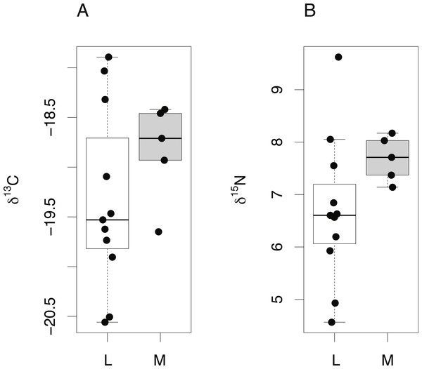Tissue-specific differences in isotopic compositions in larval and adult fish.