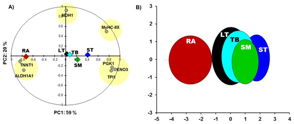 Principal component analysis (PCA).