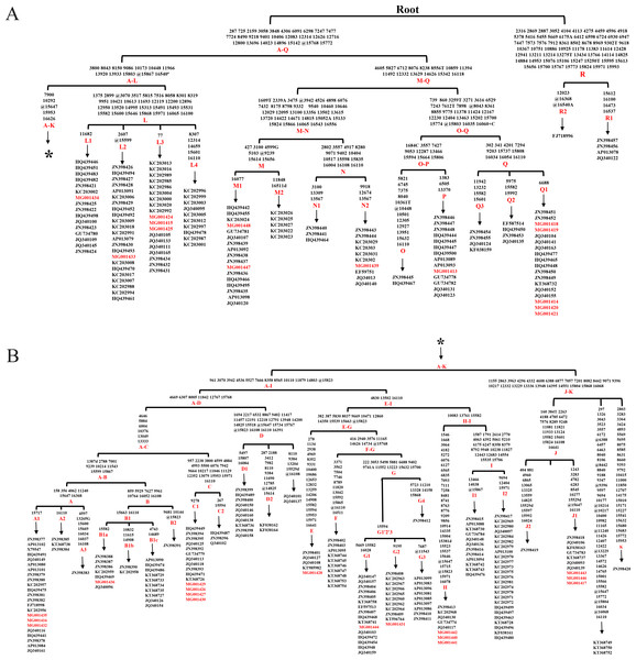 Haplogroup tree of mtDNA genome sequences from the studied horses.