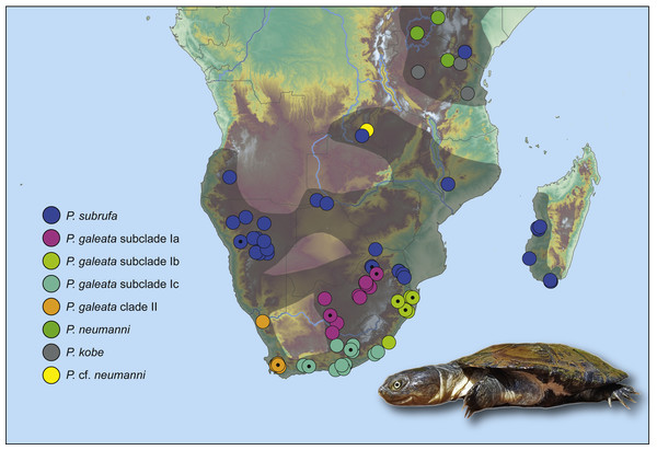 Genetically verified records of Pelomedusa galeata, P. subrufa sensu stricto and geographically neighboring species in southern Africa and adjacent regions.