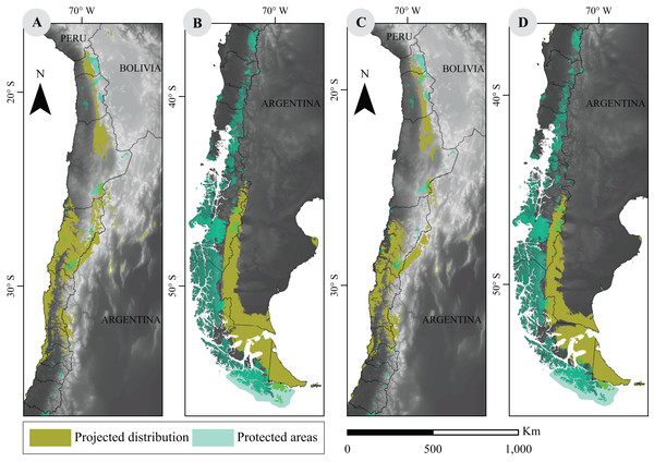 Overlap between projected environmental niche models under two extreme climate scenarios and distribution of protected areas in Chile.
