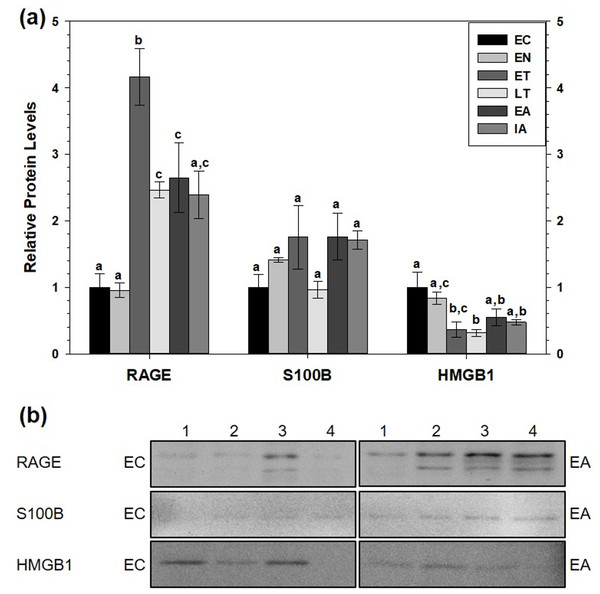 Relative total protein levels of RAGE andligands S100B and HMGB1 in white adipose tissue (WAT) of 13-lined groundsquirrels.