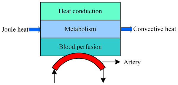 Bioheat transfer model during tSCS.