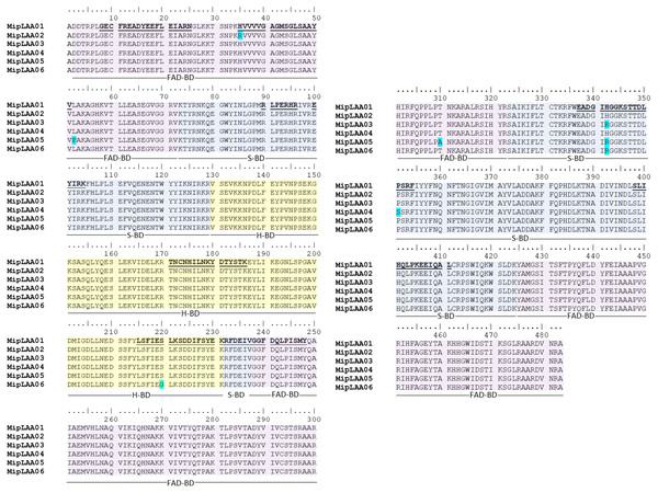 Amino acid sequences of six MipLAAO isoforms deduced from M. mipartitus venom gland cDNA sequences.