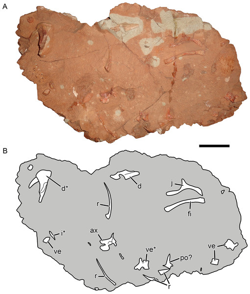 KPM 291, a block containing disarticulated elements referred to Gorynychus masyutinae gen. et sp. nov.