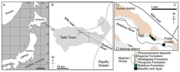 Maps showing the locality of AMP 35, Taikicetus inouei at Taiki Town, Hokkaido, Japan, reported in this study.