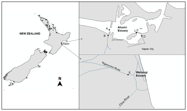The Ahuriri Estuary and Waitangi Estuary sampling sites.