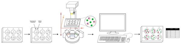 Workflow schematic.
