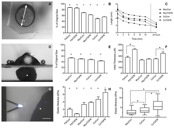 Biomechanical and elastic properties of 3D tissue constructs.