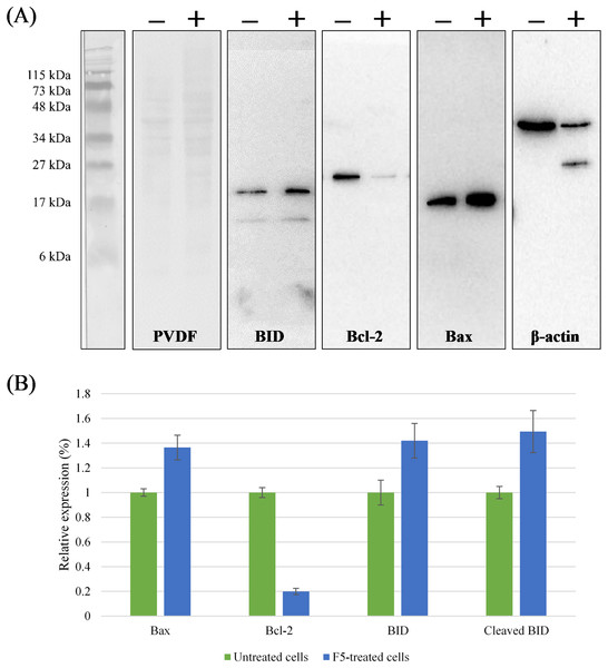 Regulation of the Bcl-2 family proteins during F5-induced apoptosis.