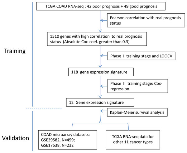 The flow chart of the development process of the COAD gene expression signature.