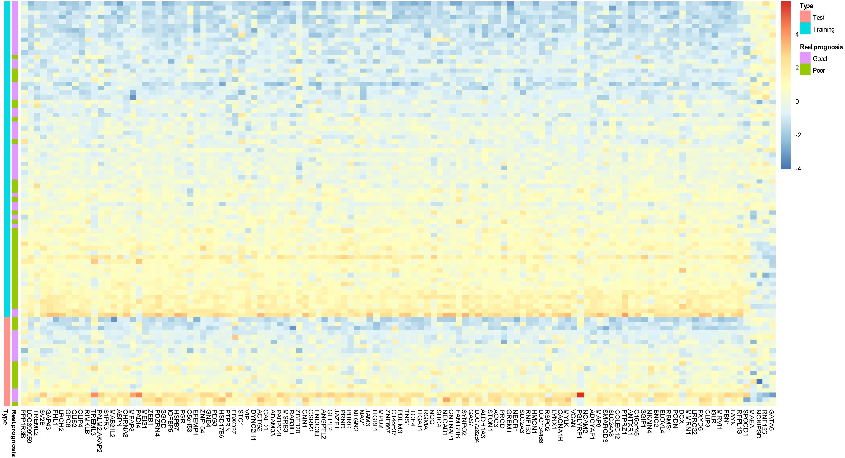 Image Result For Colon Cancer Test