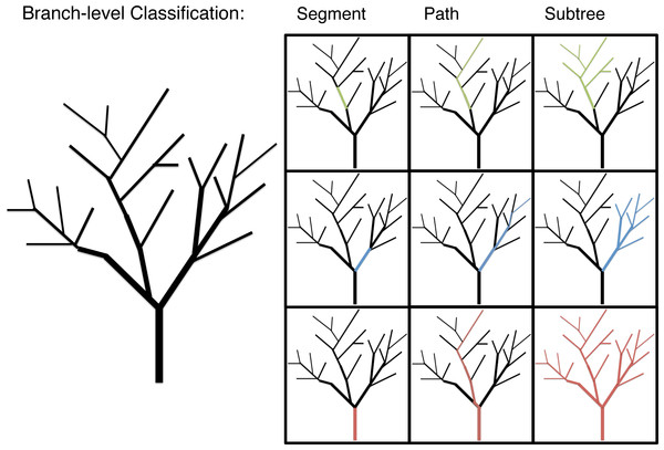 An illustration of the branch-level classifications: segment, path and subtree.