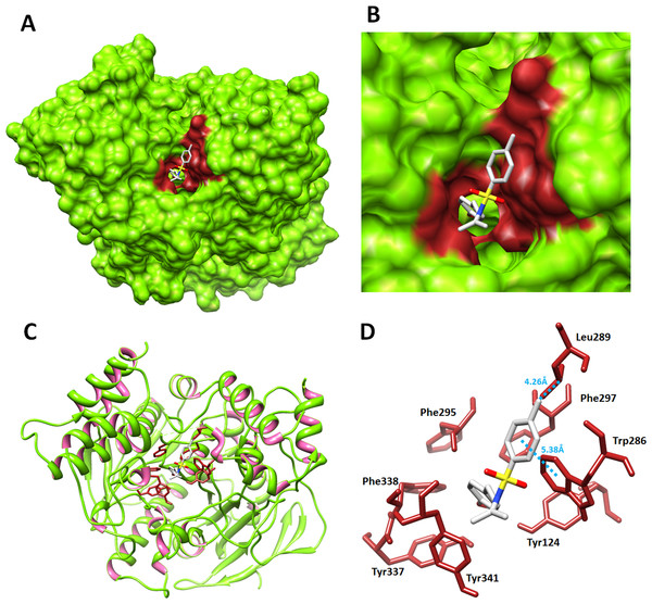 Molecular docking interaction of 5c with acetylcholinesterase.