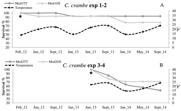 Survival trends in Crambe crambe shallow-water mariculture on Travertine Tiles (TT) vs Oyster Shells (OS) (Capo Caccia–Isola Piana MPA, Sardinian Sea).