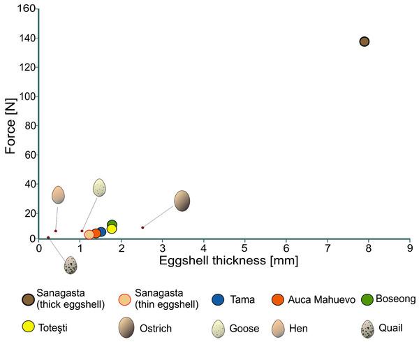 Egg strength of several dinosaur eggs.