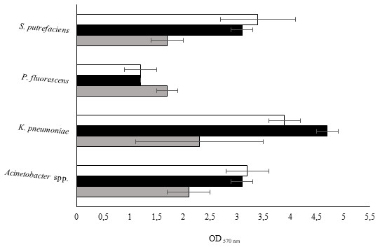 Values of OD570 nm as a measure of biofilm mass at 24 (grey), 48 (black) and 72 h (white).