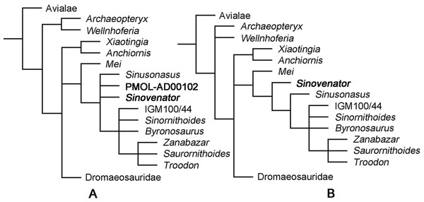 Phylogenetic reconstruction.