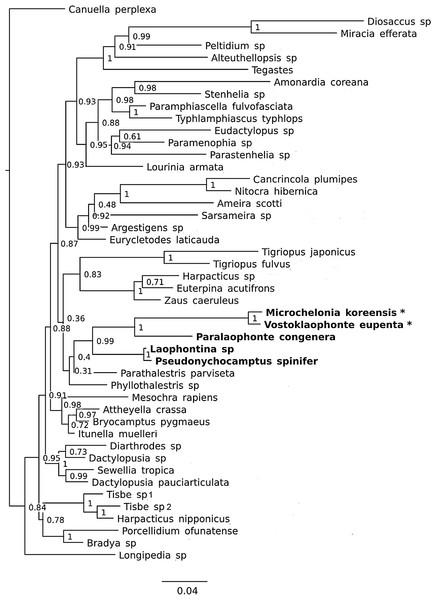 Phylogenetic tree of harpacticoids based on nuclear 18S ribosomal DNA data.